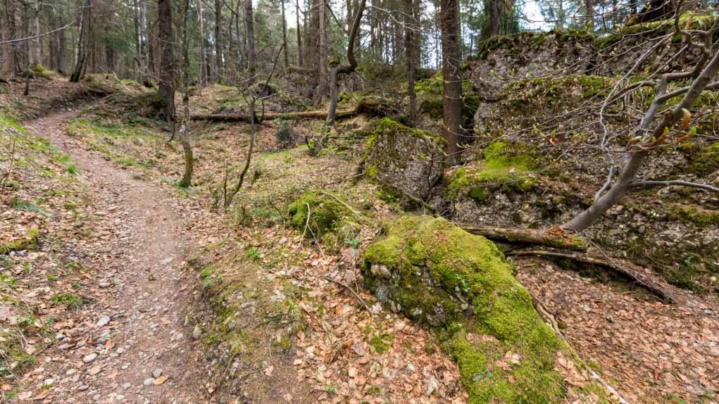 Abstieg im wilden Wald