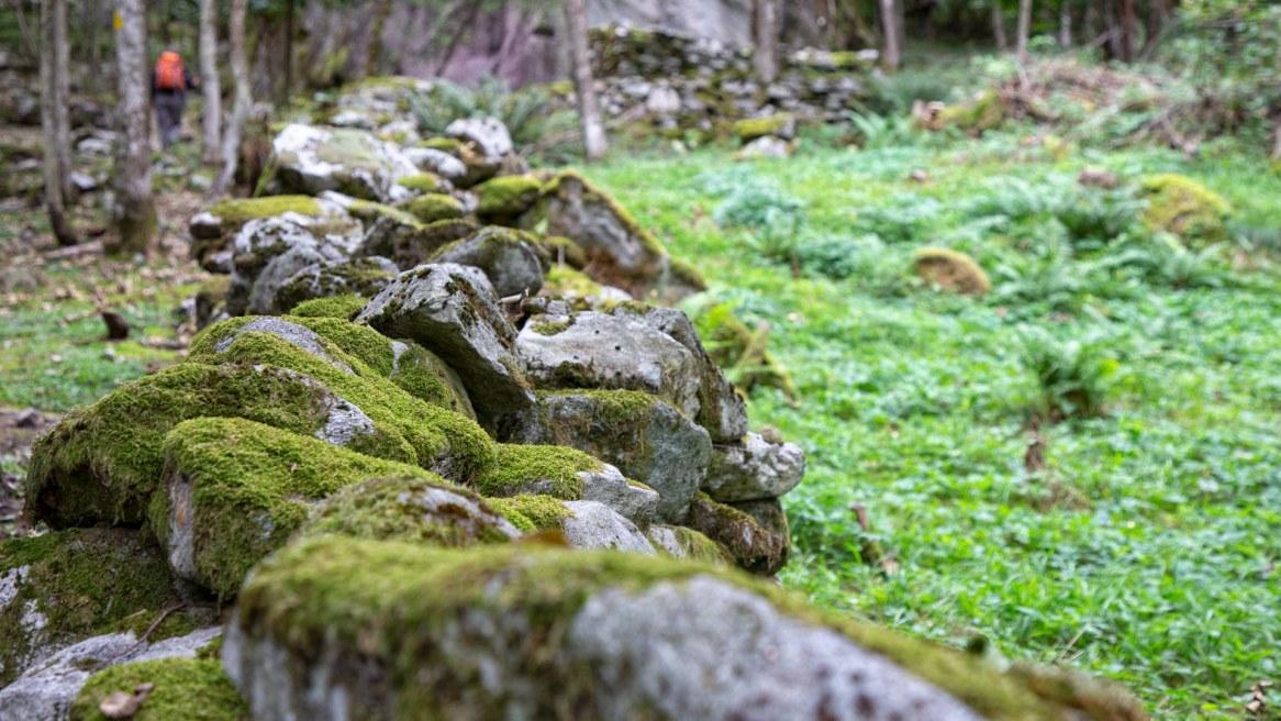 Trockensteinmauer mit Moos