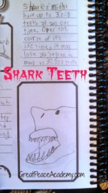 Learning Sharks in Homeschool