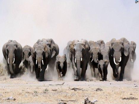 elephants-5a