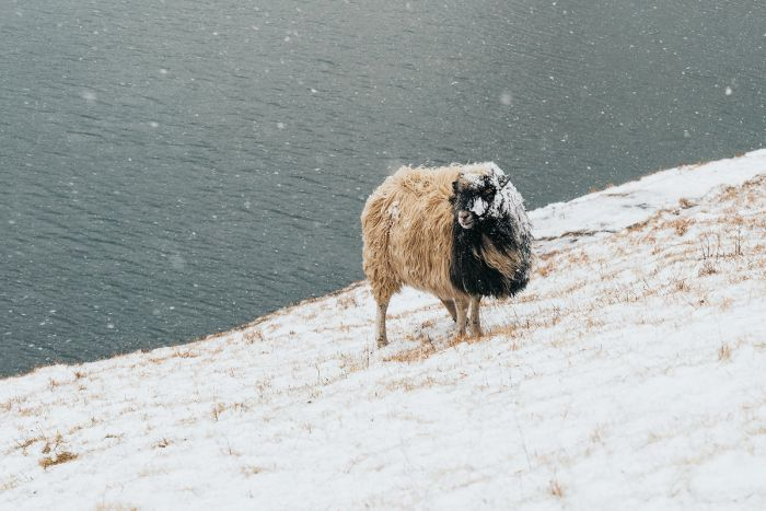 Saksun- The Faroe Islands Guide - Renee Roaming