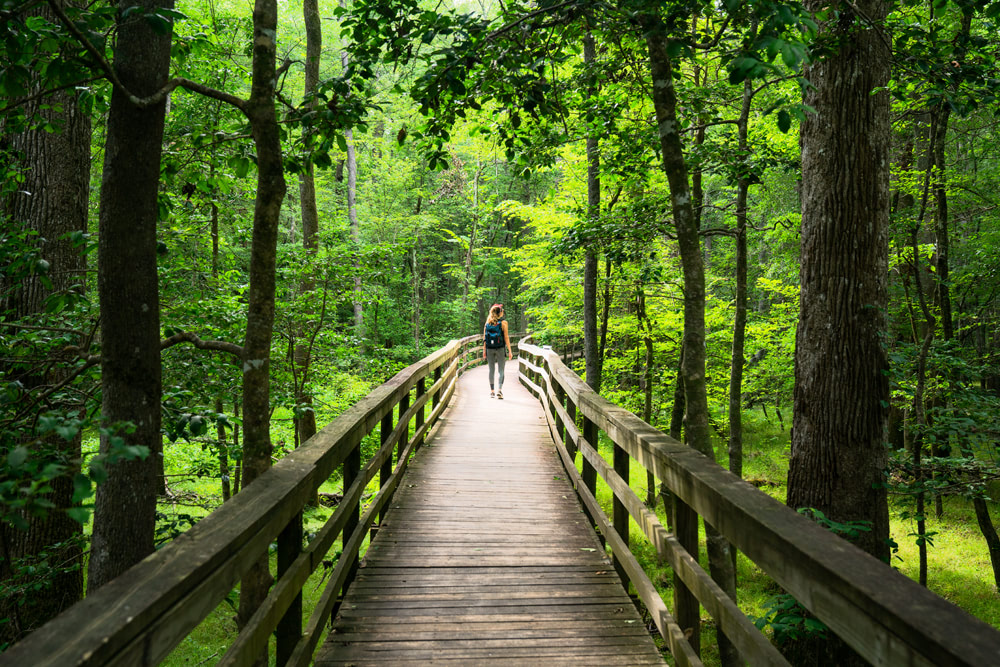America's National Parks - Ranked Best to Worst - Congaree National Park