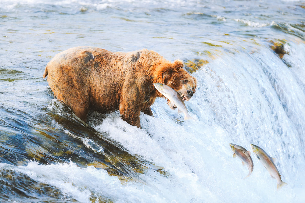 America's National Parks - Ranked Best to Worst - Katmai National Park
