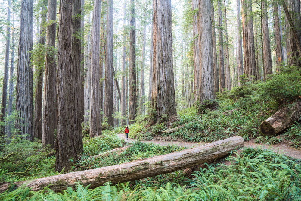 America's National Parks - Ranked Best to Worst - Redwood National and State Parks