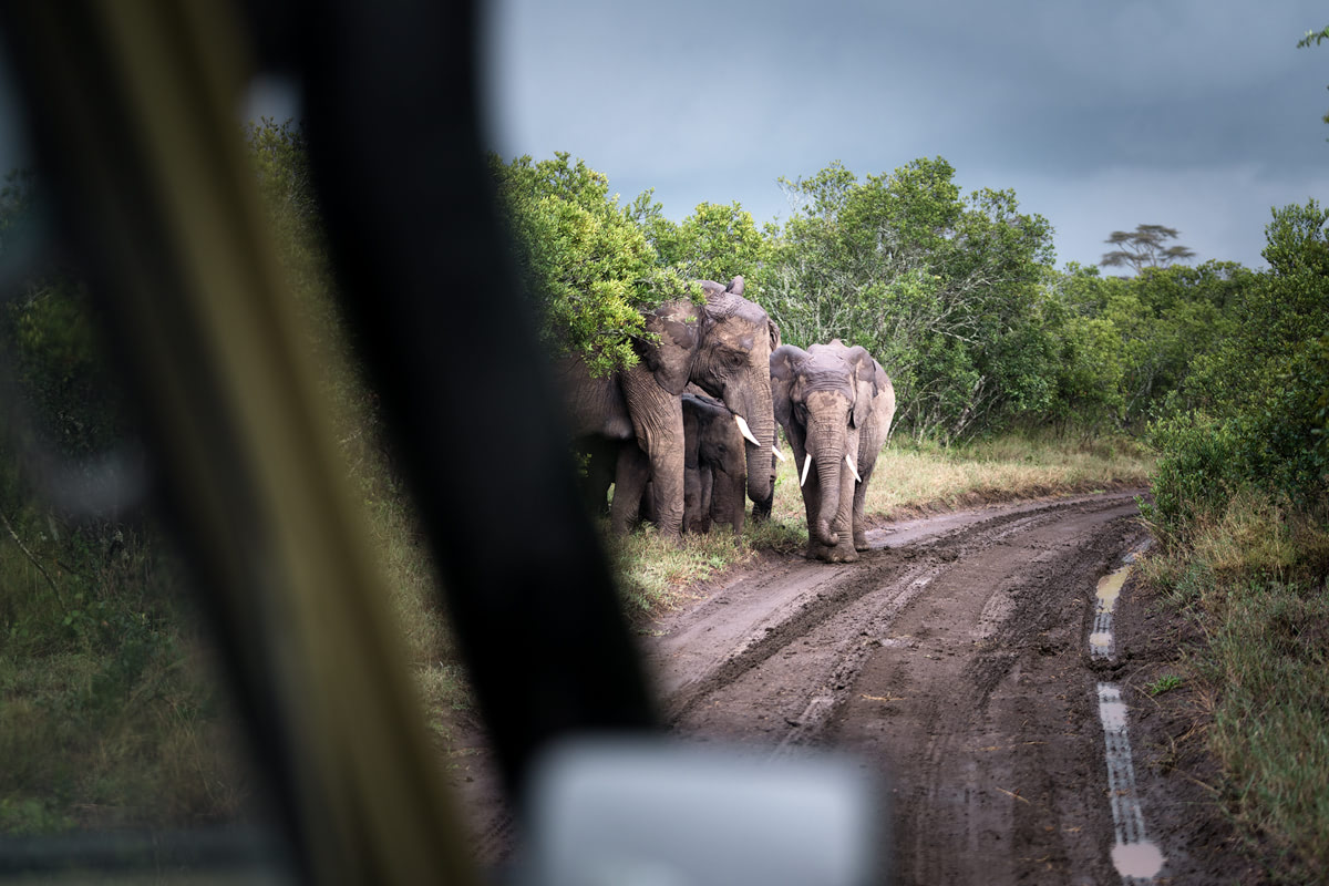 Ultimate Safari Adventure at Ol Pejeta Conservancy Kenya Elephants and baby