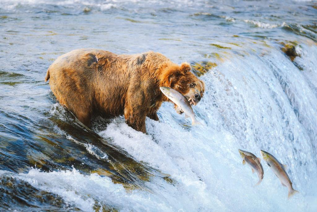 Introduction to Bear Safety when Hiking and Camping - Camping in Bear Country in Katmai National Park Alaska