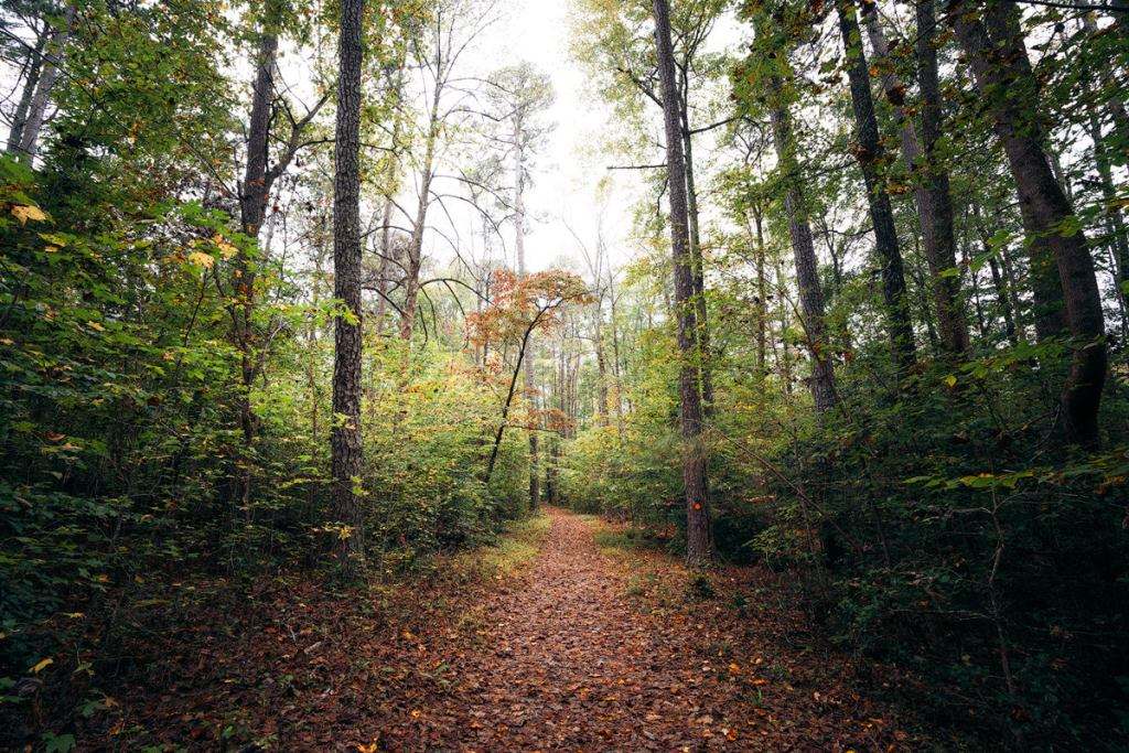 Williamsburg Virginia Guide and Itinerary - Bassett Trace Nature Trail