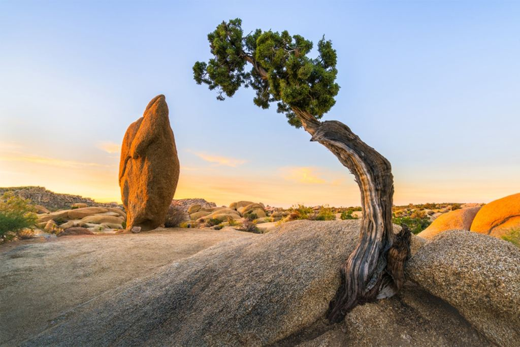 Best National Parks to Visit in Spring - Joshua Tree National Park Spring Travel Guide