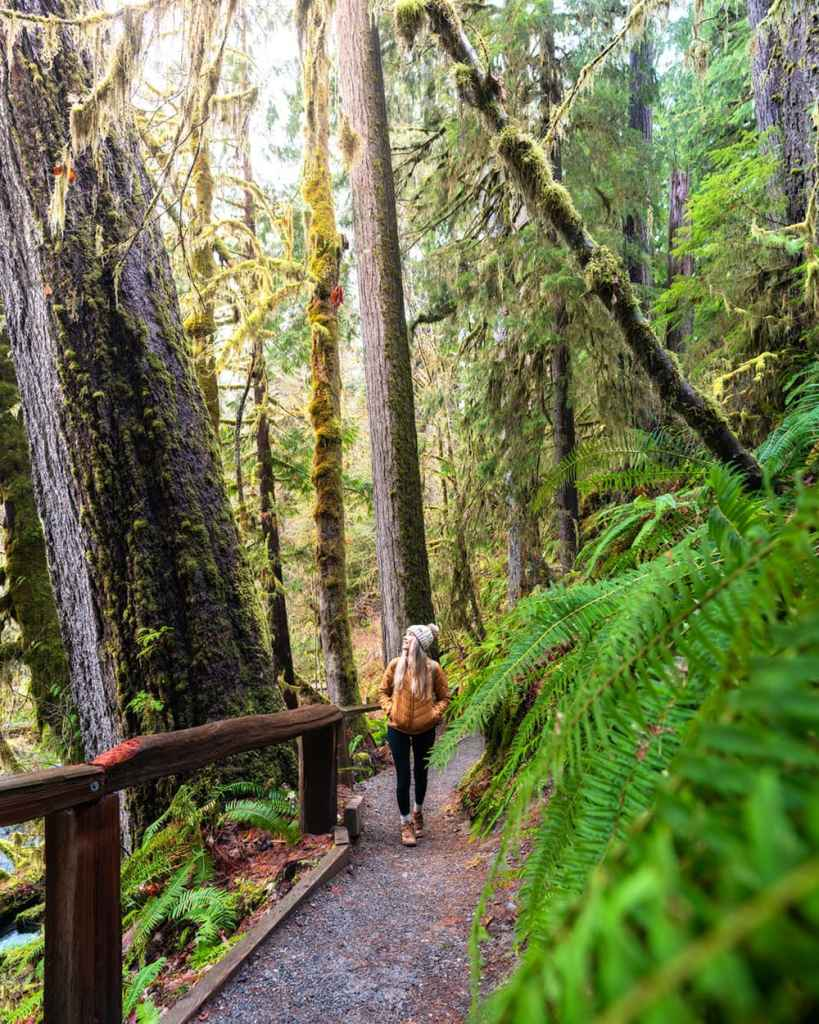 Best National Parks to Visit in Spring - Olympic National Park - Hoh Rainforest