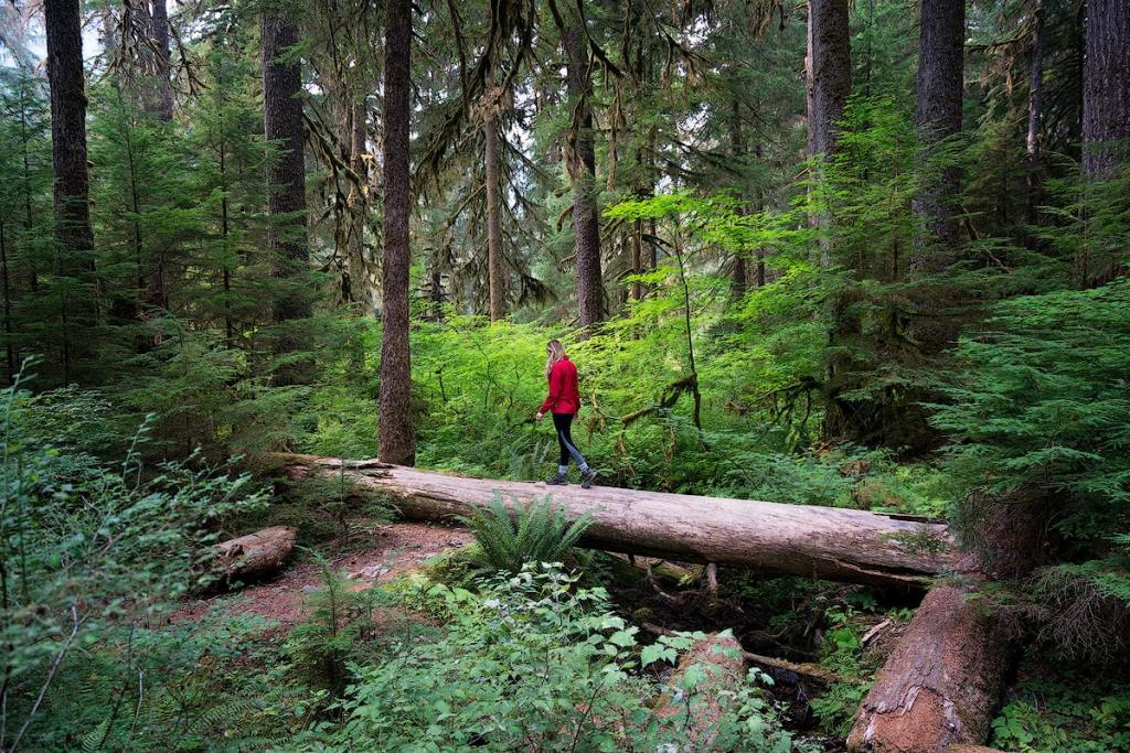 Best National Parks to Visit in Spring - Olympic National Park