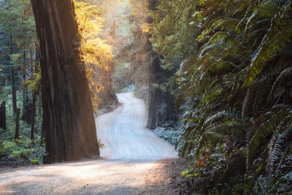 Best National Parks to Visit in Spring - Redwood National Park Driving