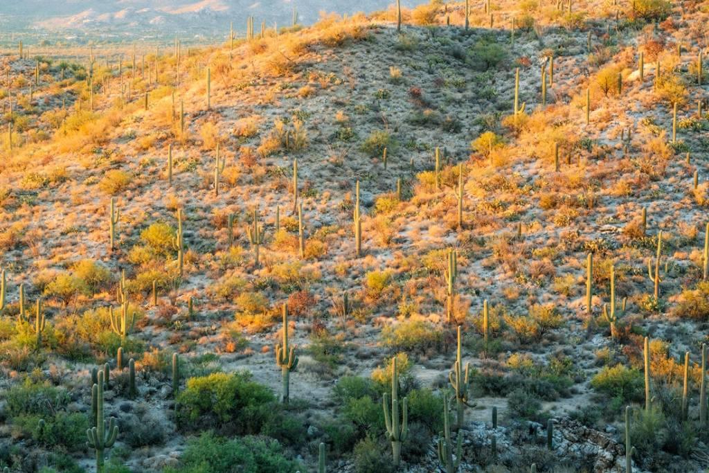 Best National Parks to Visit in Spring - Saguaro National Park Guide
