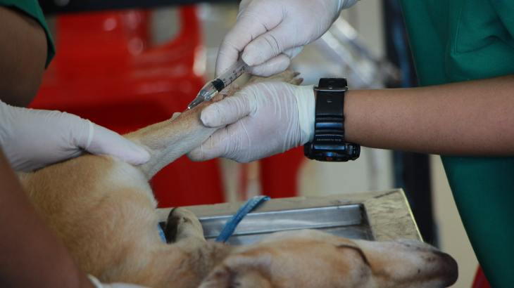 veterinarian treating a dog