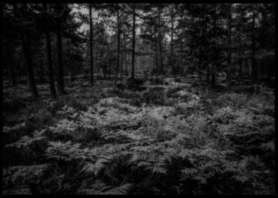 dark-forest-8