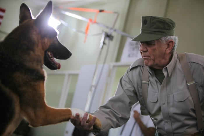 Saving Private K-9 Cancelled Or Renewed For Season 3?