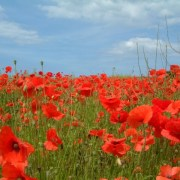 Remembrance Sunday 2015 services in Renfrewshire – times and venues