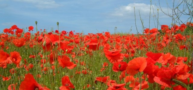 Renfrewshire Council to mark Armistice Day
