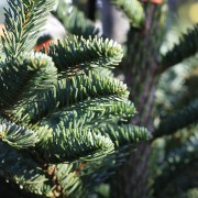 Real Christmas tree recycling points in Renfrewshire