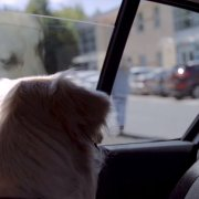 Scottish SPCA appeal: Dogs die when left in hot cars, don't risk it!