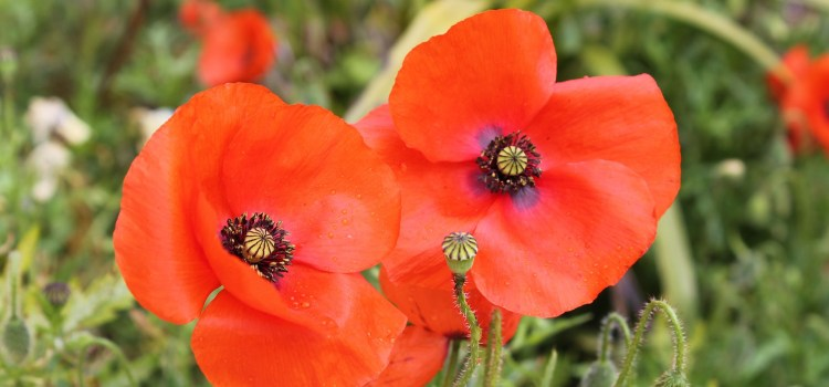 Remembrance Sunday Services in East Renfrewshire 2018