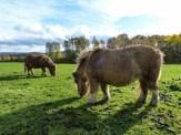 Pferdchenchen