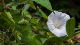 Blüte in den Barmer Anlagen
