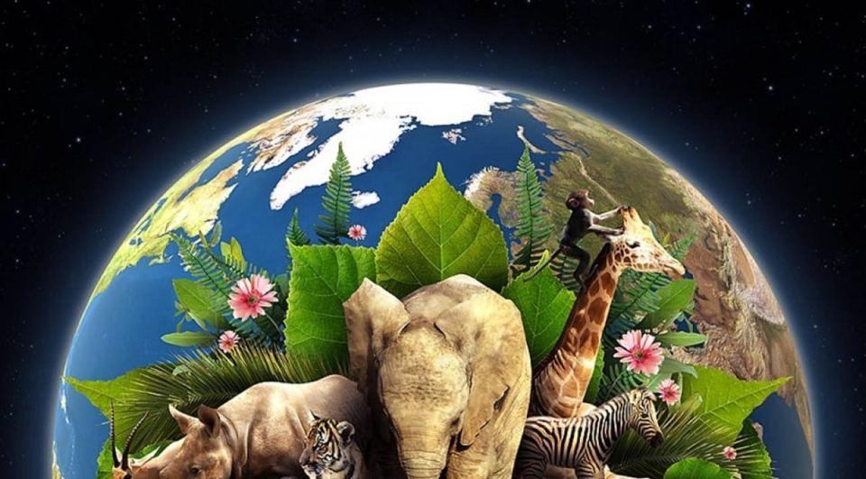Día de la Tierra: cuándo es, qué se celebra y qué objetivo tiene