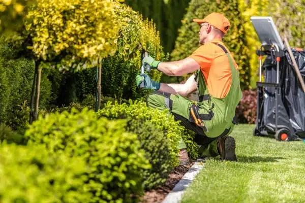entretien d un jardin et exemple de devis