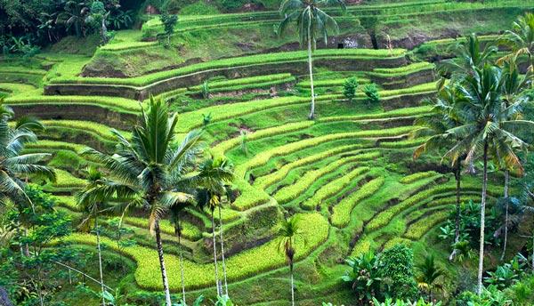 Home Pariwisata Bali Dan It