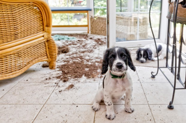 Pet Hair Can Be A Huge Problem From Covering Furniture And Clothing To Forming Clumps On Carpets In Many Cases Lint Rollers Vacuums Just Don T