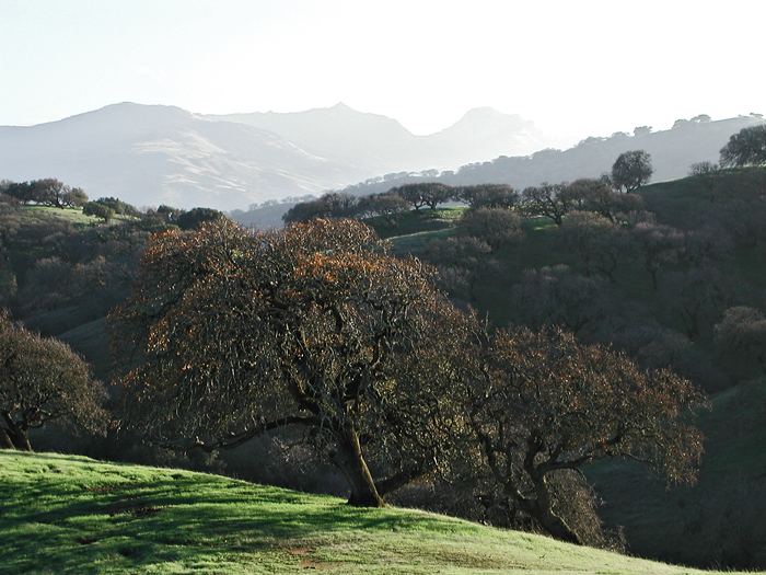 fading-hills.jpg