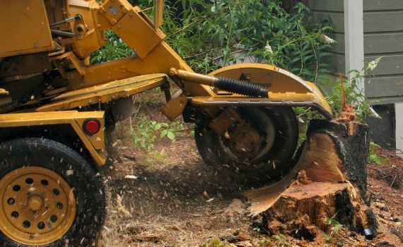 Find Tree Stump Removal Tool Rentals