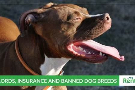 Landlords  Insurance and Dog Breed Restrictions   RentPrep Landlords  Insurance and Dog Breed Restrictions