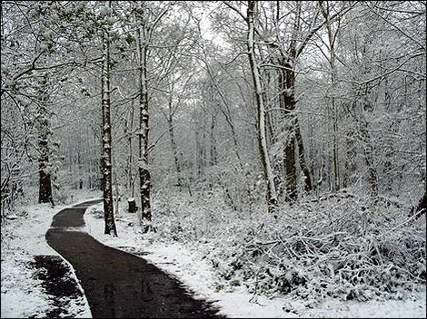 snow_norsey_woods