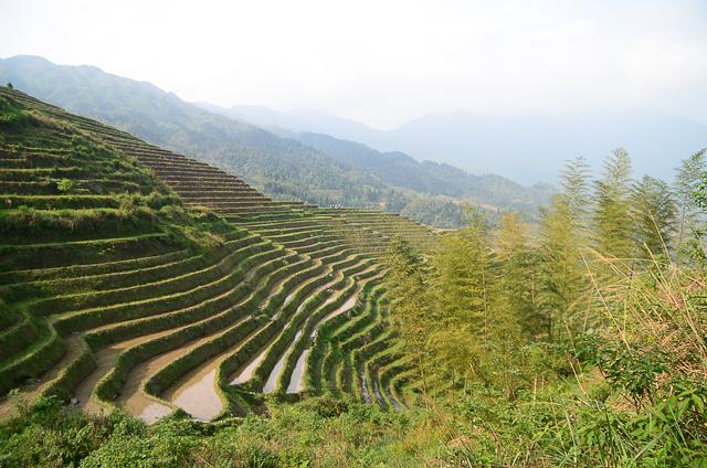 Dazhai - Rizières en terrasses