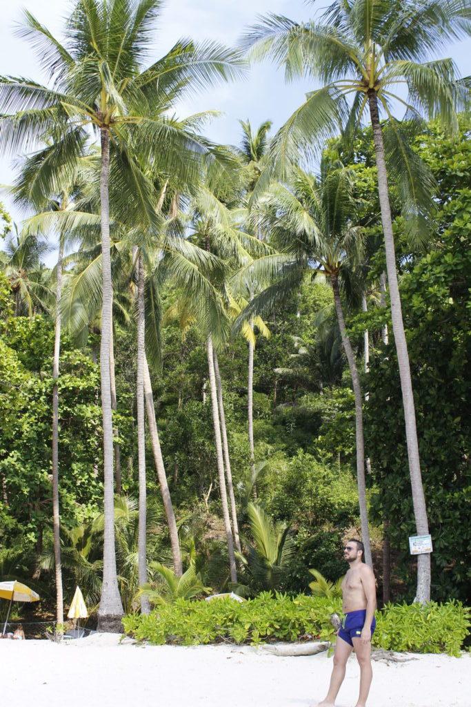 Phi-Phi islands φοίνηκες