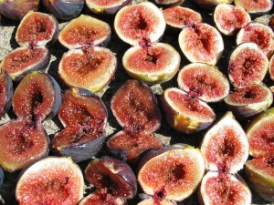 Figs ready to dry under the Italian Sun