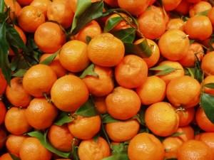 Oranges in Sicily, Italy