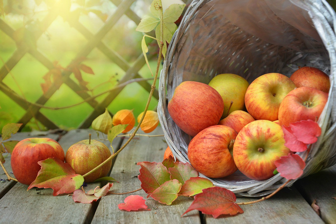 An image of apples spilling out of a basket onto a table