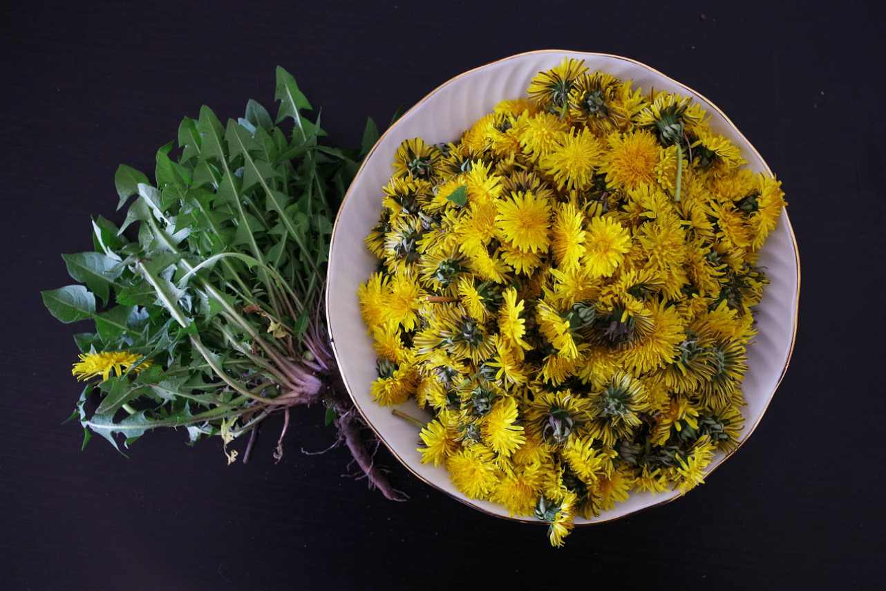 An image of a bowl containing dandelion flowers next to a bunch of dandelion leaves
