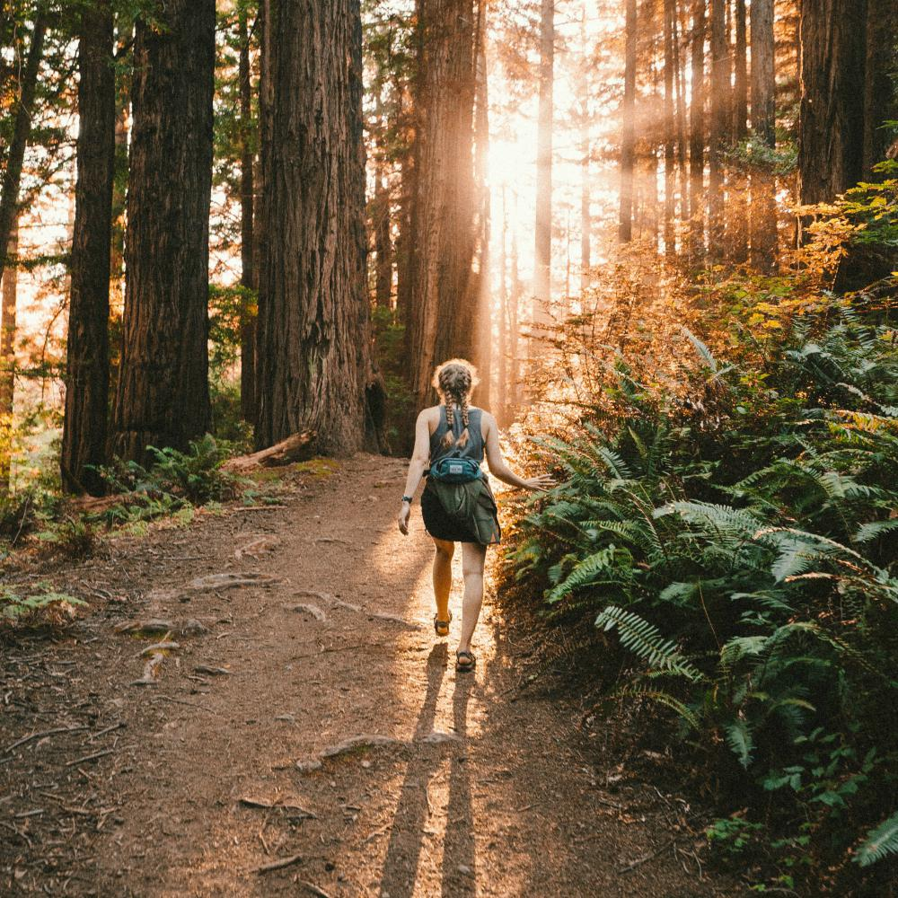 An image of a woman walking on a path through a forest