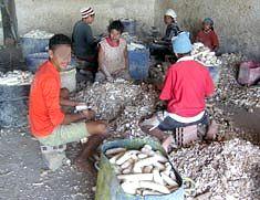 Crianças e adolescentes nas casas de farinha