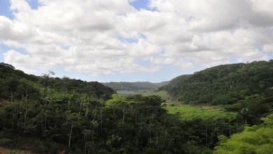 Photo of Selo nacional Empresa Amiga da Mata Atlântica será lançado em Alagoas