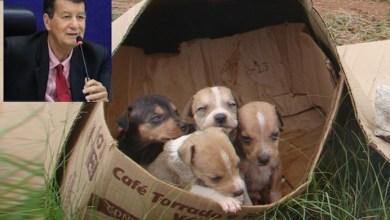 Photo of PL proíbe abandono de animais domésticos ou domesticados em logradouros públicos de Maceió