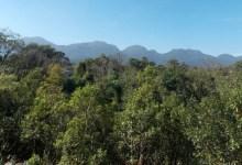 Photo of Desmatamento na Mata Atlântica cresce 27,2%, diz relatório