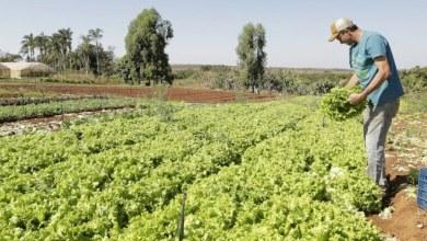 Photo of AGRONEGÓCIOS: projeto de socorro a agricultores familiares é aprovado pela Câmara dos Deputados