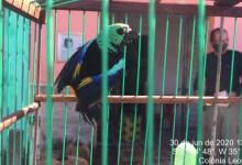 Photo of FISCALIZAÇÃO: mais de 200 pássaros são resgatados durante ação conjunta na APA de Murici