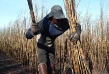 Photo of Governo divulga fluxo de atendimento para vítimas de trabalho escravo