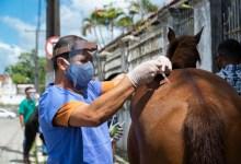 Photo of Programa de Acolhimento de Animais vacina cerca de 50 equinos em Bebedouro