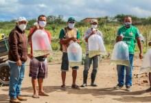 Photo of DELMIRO: 10.000 alevinos entregues aos pequenos produtores rurais